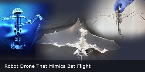 Engineers Build Robot Drone That Mimics Bat Flight