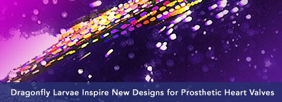 Dragonfly Larvae Inspire New Designs for Prosthetic Heart Valves